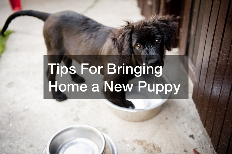 best tips for bringing a new puppy home